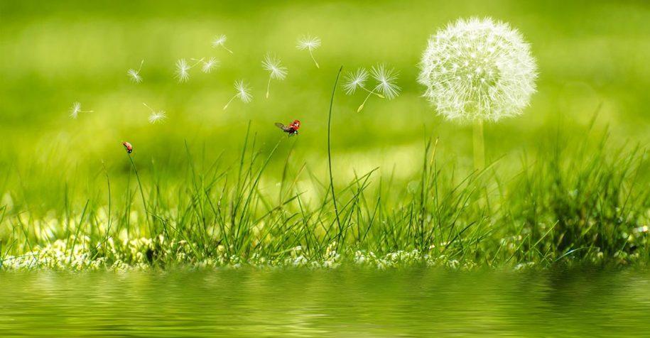 Accueillir l'énergie du printemps