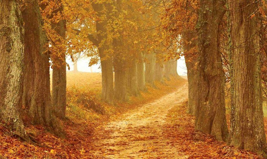 Novembre : second mois de l'automne