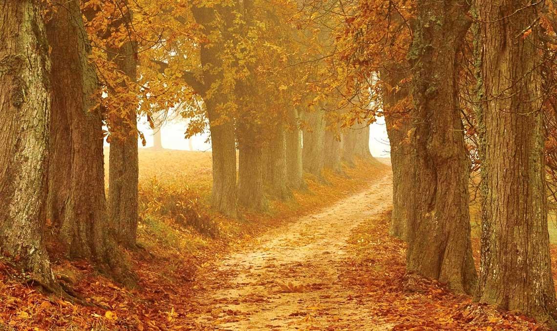 Novembre : second mois de l'automne - Réflexologie plantaire à Bordeaux