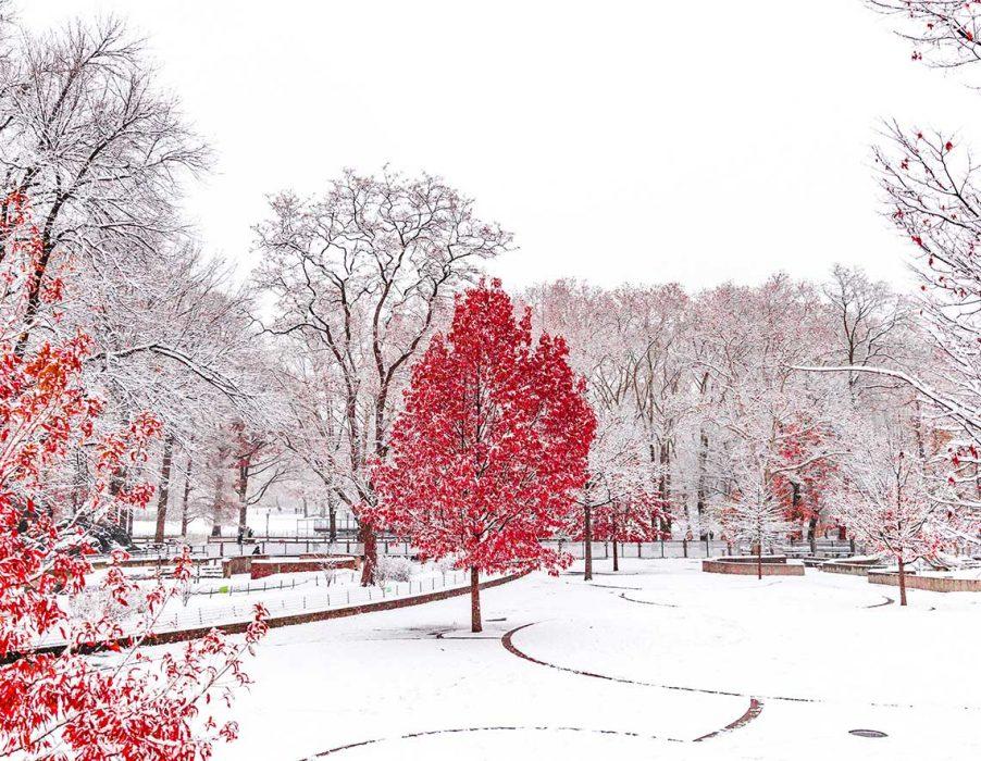 Décembre, premier mois d'hiver du cycle des 3 mois