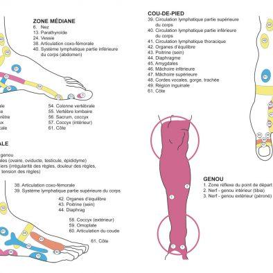 Légendes des zones réflexes des pieds - Équilibre & Sens